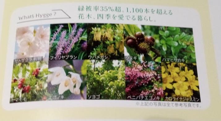 ガーデンに植えられる植物
